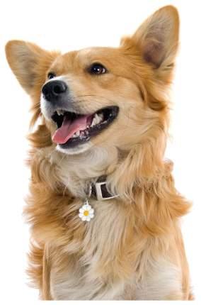 Адресник для собак My Family Charms Ромашка (2 х 2 см)