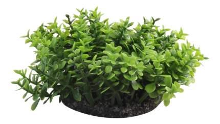 Laguna Растение аквариумное Микрантемум, 5 см, 3 ветки