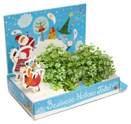 Набор для выращивания Живая открытка - Зеленого Нового года Happy Plant