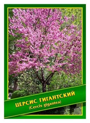 Семена Церсис Гигантский, 0,5 г Симбиоз