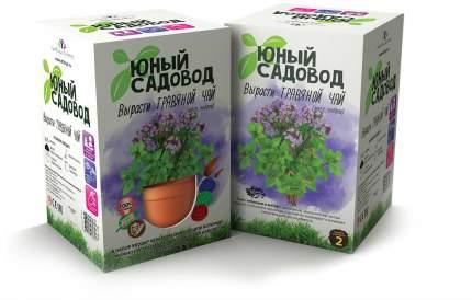 Набор для выращивания Юный садовод Вырасти травяной чай 405 тимьян, мята