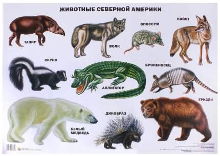 Демонстрационный Материал проф-Пресс плакат Животные Северной Америки