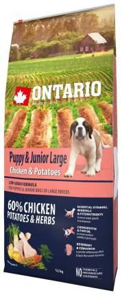 Сухой корм для щенков Ontario Puppy&Junior Large, для крупных пород, курица картофель 12кг