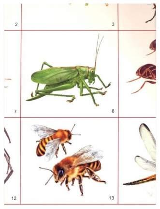 Демонстрационный плакат насекомые 26881