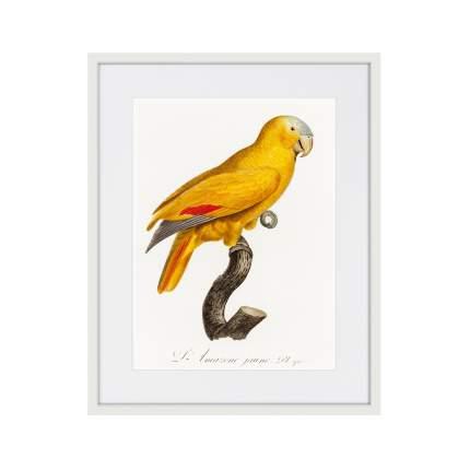 Литография Beautiful parrots №1, 1872г., 52 x 42 см, Картины в Квартиру