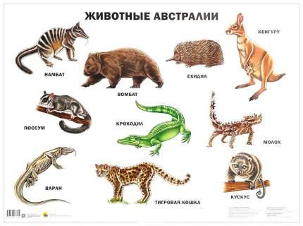 Плакат проф-Пресс плакаты на картоне Животные Австралии (Формат А2)