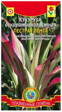 Семена Кукуруза декоративнолистная Пестрая лента, 5 шт, Плазмас