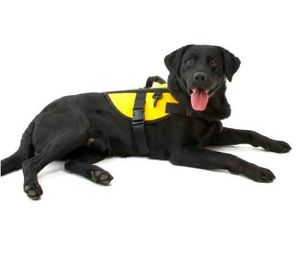 Вожжи для животных Kruuse Rehab FitPAWS, жилет для реабилитации, желтый, L