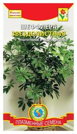 Семена Шеффлера Звездолистная, 5 шт, Плазмас