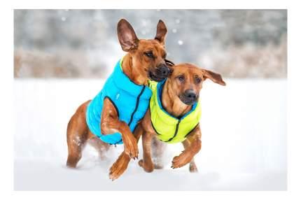 Куртка для собак AiryVest размер XS унисекс, зеленый, голубой, длина спины 30 см