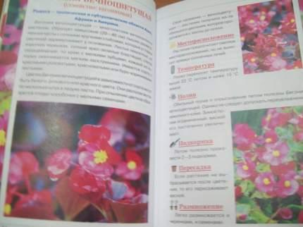 Комнатные Растения, 100 Самых популярных