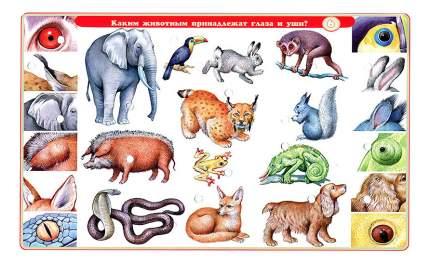 Семейная настольная игра Дрофа О животных