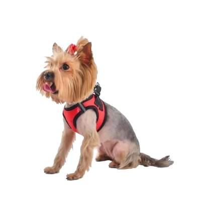 Шлейка для собак Дарэлл Zoo-M Кай S Красная