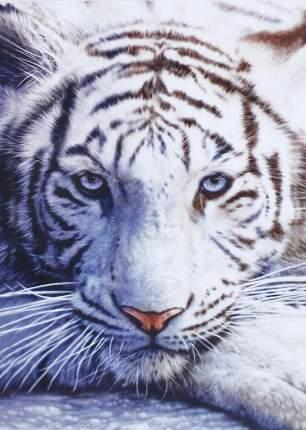 """Картина по номерам MG3290 """"Белый тигр"""""""