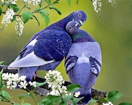 """Набор алмазной мозаики """"Яркие Грани"""" """"Голуби"""", размер 50х40см, 57 цветов"""