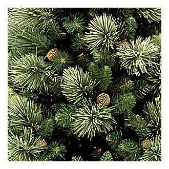 Сосна искусственная National Tree Company каролина 243 см