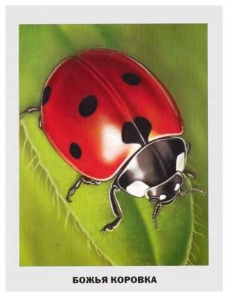 Обучающие карточки проф-Пресс Уроки для Самых Маленьких. насекомые 017420