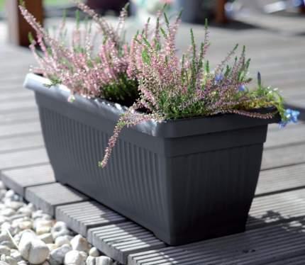 Prosperplast Балконный ящик TERRA, 60 см, цвет антрацит