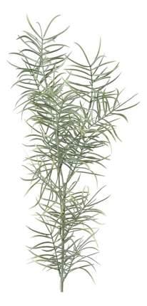 Декоративный предмет Mr Plant Спаржа искусственная