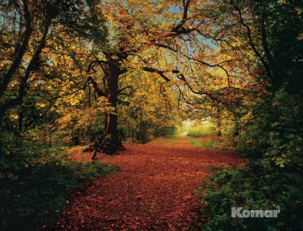 8-068 Фотообои KOMAR 'Осенний лес' 388смх2,7м бумажные