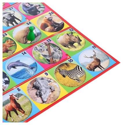 Семейная настольная игра Русский Стиль 03434 фотовикторина В мире животных