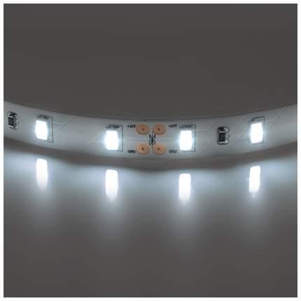 Лента светодиодная нейтральный белый цвет Lightstar 5630 400076 1 метр
