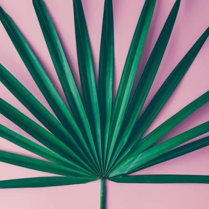 """Картина на холсте 40x40 см """"Тропический лист на розовом фоне"""" Ekoramka HE-101-935"""