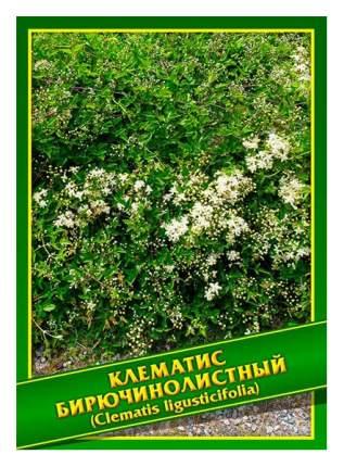 Семена Клематис Бирючинолистный, 0,5 г Симбиоз