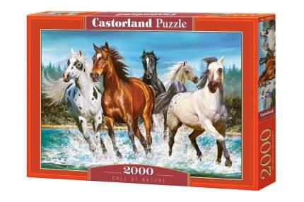 CASTORLAND Пазл Бегущие лошади, 2000 элементов С-200702