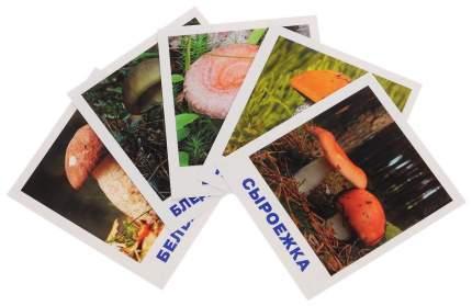 Обучающие карточки Айрис-Пресс Умный Малыш Грибное лукошко 64292