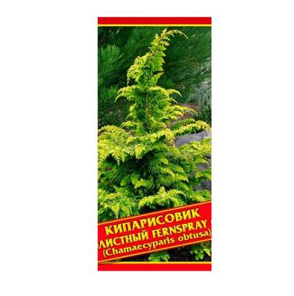 Семена Кипарисовик Туполистный «Fernspray Gold», 0,2 г Симбиоз