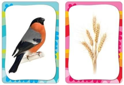Развивающие карточки РОСМЭН Развиваем внимание и память (23677)