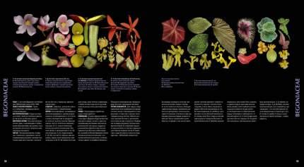 Атлас цветковых растений
