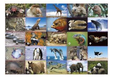 Настольная игра Бэмби мемо Удивительные животные