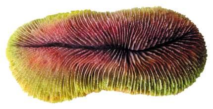 Искусственный коралл Laguna Фунгия, разноцветный, 20.2х6х9 см