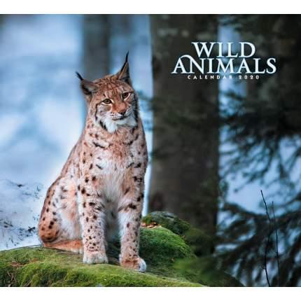 Календарь 2020 Дикие животные. Рысь (скрепка), КС122004