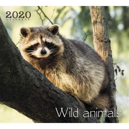 Календарь 2020 Дикие животные. Енот (скрепка), КС122005
