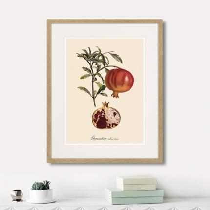 Картина Картины в Квартиру Juicy fruit lithography №7 1870г (42х52 см)