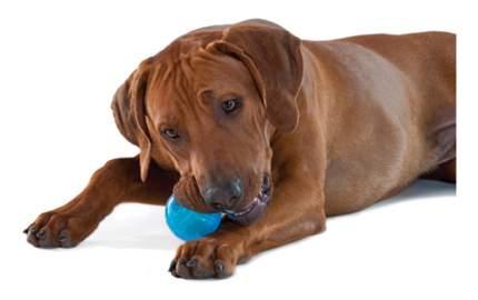 Мяч для собак Petstages ОРКА Теннисный мяч, синий, 6 см