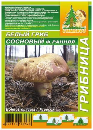 Мицелий грибов Грибница субстрат микоризный Белый гриб Сосновый форма Ранняя, 1 л Симбиоз