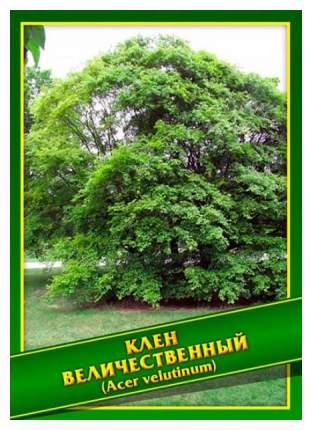 Семена Клен Величественный, 1 г Симбиоз