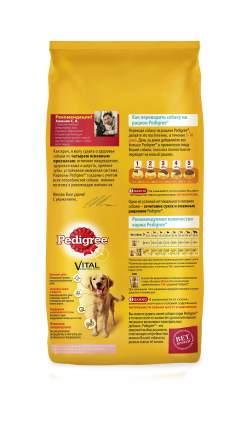 Сухой корм для взрослых собак всех пород Pedigree Vital Protection с говядиной, 13кг