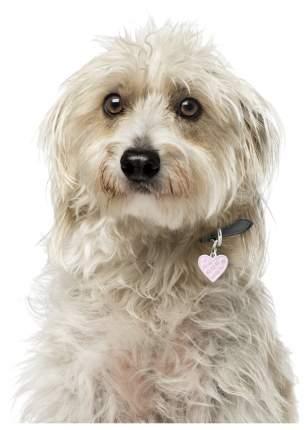 Адресник для кошек и собак My Family Chic со стразами в форме сердца (2 х 2 см, Розовый)