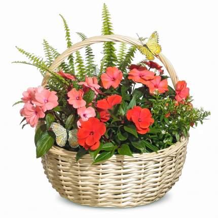 Букет Цветочный подарок