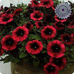 Семена цветов Поиск 159646 Петуния ампельная Шок Вейв Дип Парпл F1 5 шт.