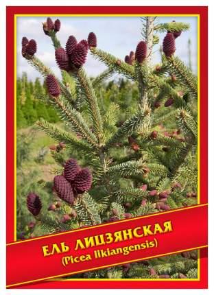 Семена Ель Лицзянская, 10 шт, Симбиоз