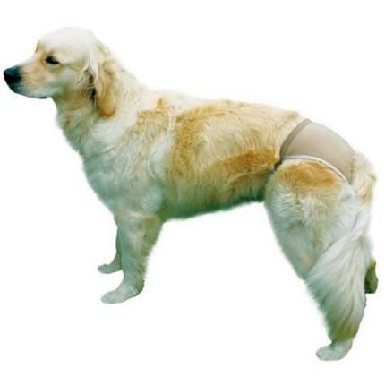 Трусы для собак TRIXIE Люкс №1, 24-31см, х/б, бежевые