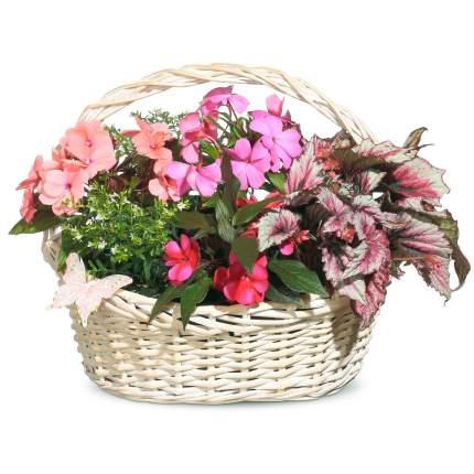 Букет Flora Express Сердечное поздравление