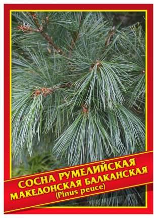 Семена Сосна Румелийская/Македонская/Балканская, 5 шт, Симбиоз