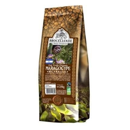 Кофе в зернах Broceliande maragogype Nicaragua броселианд марагоджип Никарагуа 250 г